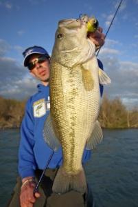 bass17