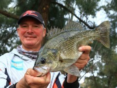 bass australia